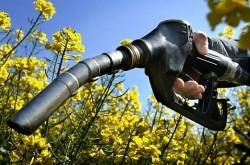 Agrocombustíveis, novas reivindicações aquando do conselho Energia de Bruxelas