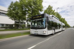The Man Lion's City wins the « Bus of the year 2015 » !